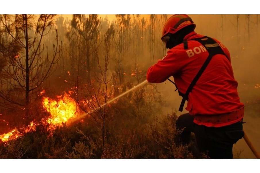 Detido homem que terá ateado fogo no concelho de Viseu