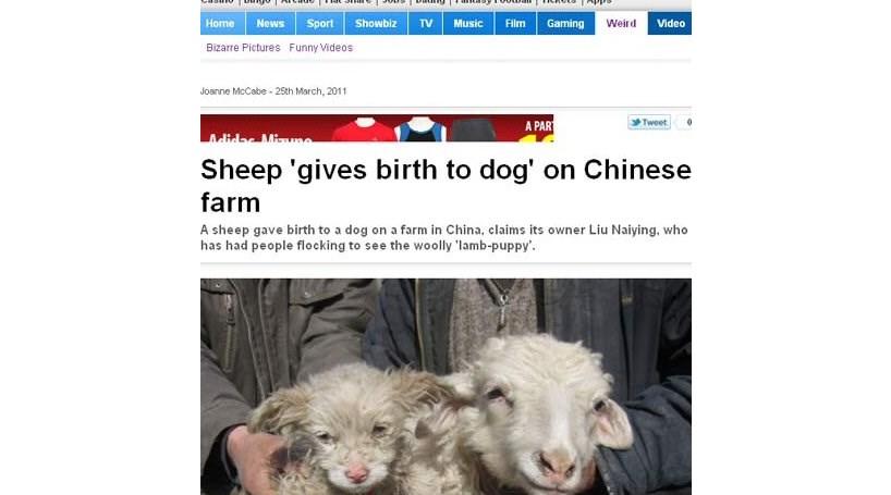 Ovelha dá à luz cria que se parece com cão