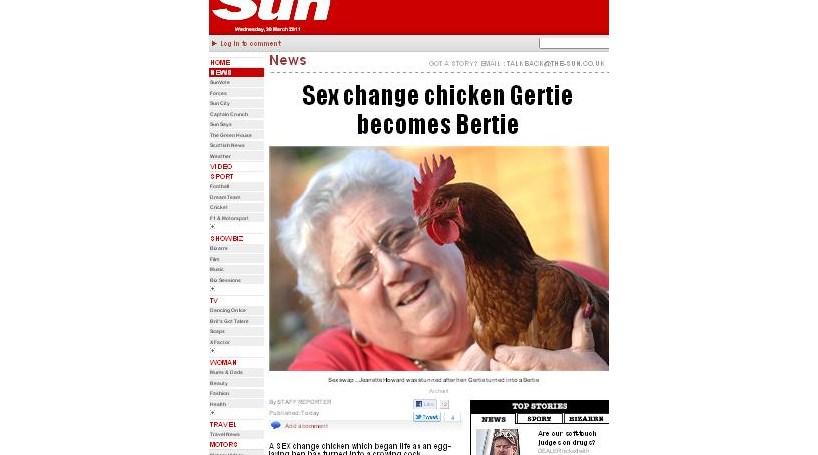 Galinha muda de sexo