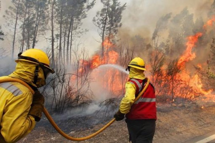 Quase 214 mil hectares de área ardida até 31 de Agosto