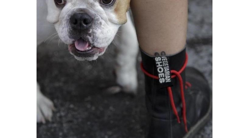Manifestantes exigem nova lei dos direitos dos animais