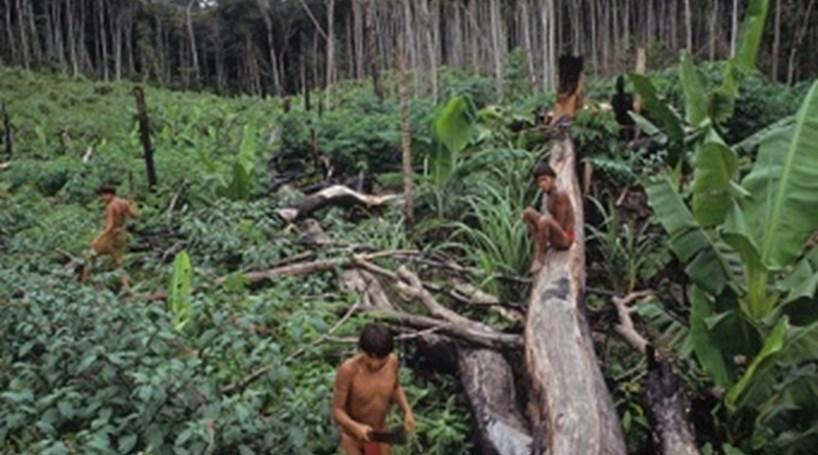 Aldeias de índios atacadas e queimadas no Amazonas