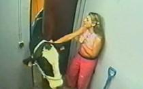 Mundo Louco: A vaca toca sempre duas vezes