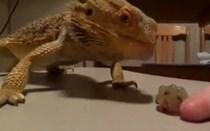 Mundo Louco: A batalha épica entre o mini-Godzilla e uma uva