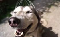Mundo Louco: Massajador é o melhor amigo do cão