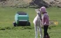 Mundo Louco: Cavalo bebé é o melhor amigo das crianças