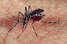 Investigadores portuenses identificam genes resistentes à dengue