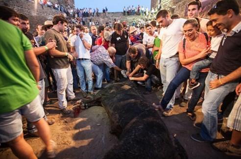 Resultado de imagem para Não há touros de morte em Portugal