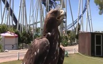 AquaShow Park Hotel: Show de Aves de Rapina