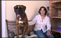 Boxer: um cão de guarda
