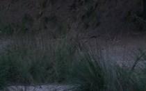 O canto dos veados na Tapada Nacional de Mafra