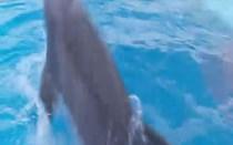 Jardim Zoológico de Lisboa: Golfinho-roaz