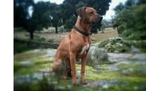 Conheça o cão que está a sensibilizar os portugueses