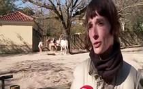 Qual será o casal mais romântico do Jardim Zoológico de Lisboa?
