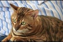 Mulher encontra gato perdido há 14 anos