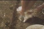 Vídeo de animais maltratados choca o mundo