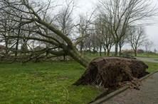 Quedas de árvores e inundações em Beja e Évora