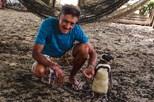Pinguim viaja 3 mil km para reencontrar homem que o salvou
