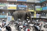 Elefante atacou três veículos com turistas