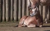 Novas crias no zoológico de Lisboa
