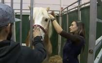 Aprender com os animais