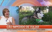 Cão impedido de viajar