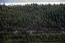 Associações querem responsabilidade criminal para quem não cumpre lei da floresta