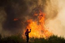 Vinte bombeiros combatem fogo florestal na zona alta da Ribeira Brava
