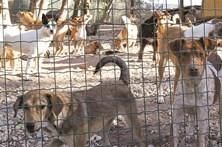 Dois anos para proibir o abate de animais