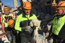 Cão sobreviveu 30 horas por baixo dos escombros