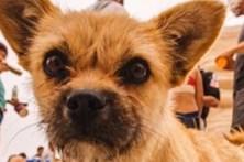 Atleta reencontra cadela que o seguiu durante 125 quilómetros