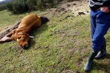 Saúde pública em risco sem recolha de animais