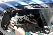Portuguesa deixa cão fechado dentro de viatura