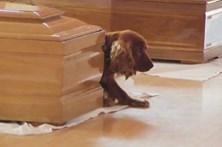 Cão de vítima do sismo de Itália não abandona caixão