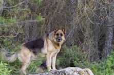 Cão deixa dono em estado grave
