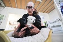 Maus-tratos a animais provocam 50 queixas no Algarve