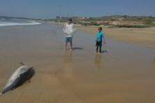 Golfinhos mortos deram à costa