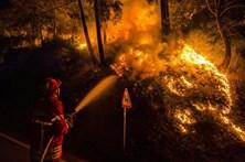 Mais de 230 bombeiros combatem fogo em Mação