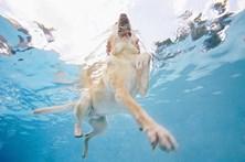 Bombeiros salvam cão de piscina em Cascais