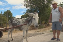 Aldeia usa burro para levar contentor do lixo
