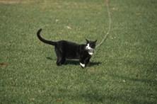 Nova lei obriga gatos a usar trela