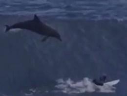 Golfinho 'aterra'  em Jovem surfista