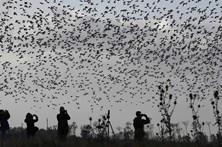 Migração de aves dá espetáculo nos céus