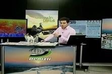 Gato de rua invade estúdio de televisão