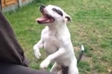 Cão famoso na net adora dançar
