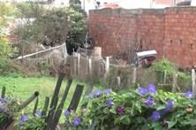 Enforca cão e enterra-o no quintal