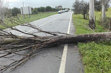 Queda de árvores condiciona trânsito em Beja