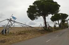 Tornados arrancaram centenas de árvores o Alentejo