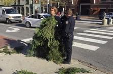 Vestiu-se de árvore para parar o trânsito