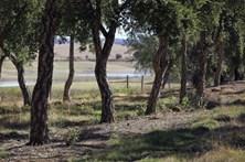 Estado fica com terrenos por registar